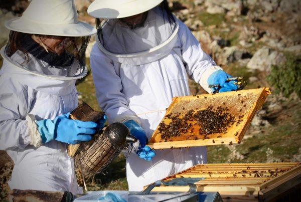 abejas apicultura